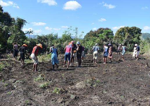 Community members planting peanuts