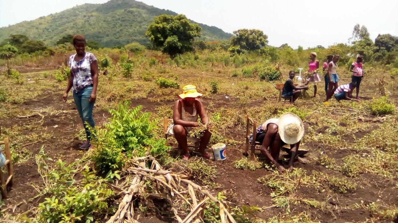 Grace Community Birth Center. Ninotte Lubin. Haiti. Gardening in Haiti. Haitian food.